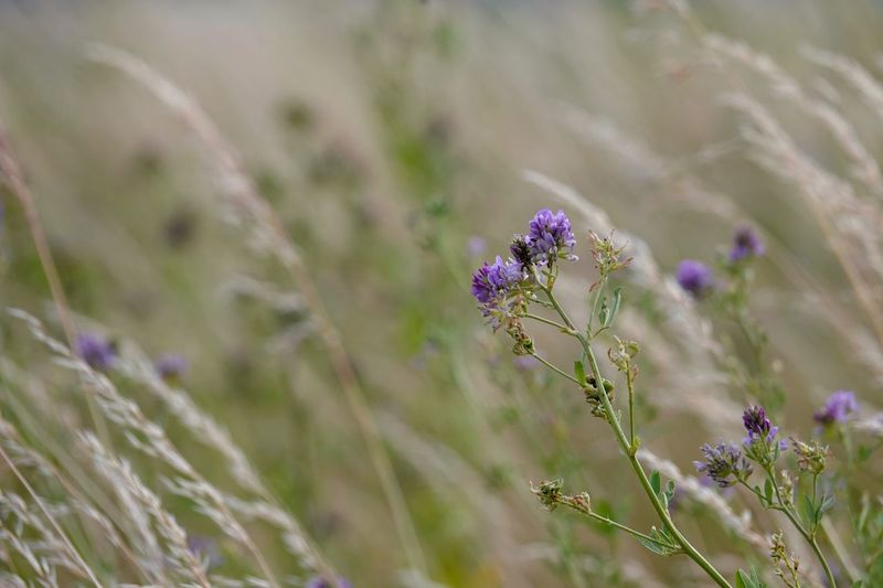 Blumenwiese Gräser Und Blüten Flower Flowering Plant Plant Beauty In Nature Fragility Growth Nature Vulnerability  Close-up Freshness Purple Selective Focus No People Field Land Invertebrate Animal Wildlife Day Focus On Foreground Lavender