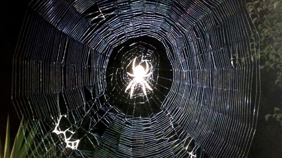 Webweaver Orb Spider Bestsellers Close-up EyeEmNewHere Concentric A New Beginning