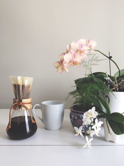 Chemex Coffee Flora Floral Orchid Morning Caffeine Bright Light