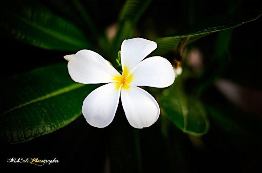 The white flower .. #my_shot #photo #photos #image #photography #photo_shooting #nikon