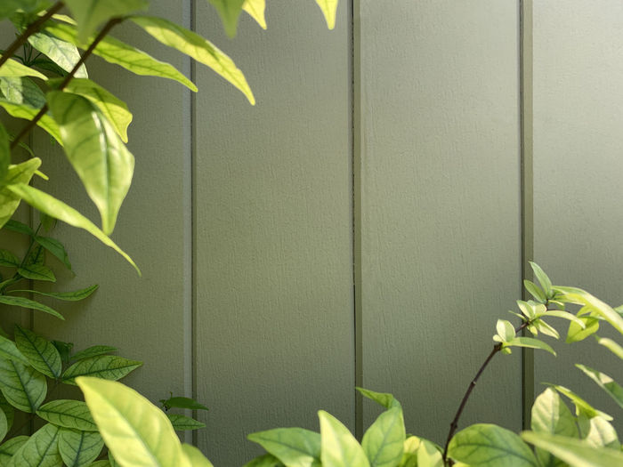 Close-up of green leaves on wall