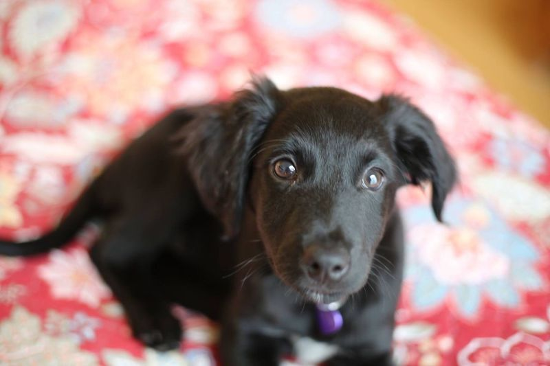 Portrait of black puppy
