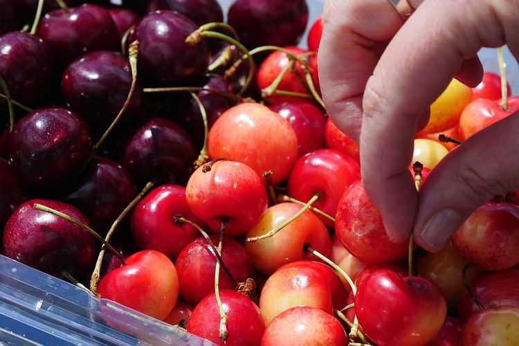 The taste of summer. Ranier cherries! Cherry Cherries Summer Summertime Summer Fruit Ranier Cherry Red Color Red Berry