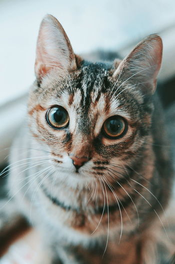 Cat Cats The Week on EyeEm Pets Domestic Cat One Animal Domestic Animals Portrait Animal Looking Looking At Camera Whisker Animal Themes Indoors  Mammal Close-up Feline No People