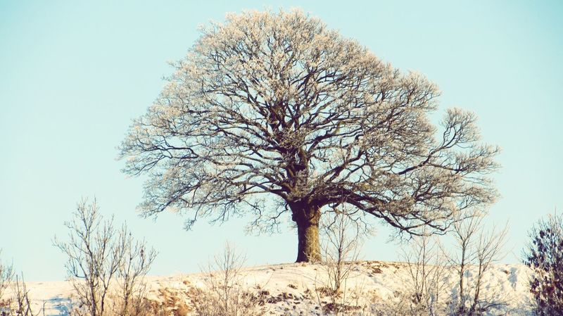 Hometree in Skurup i freezing. Cold Cold Temperature Frozen Hometree Nature Outdoors Season  Snow Tree Winter