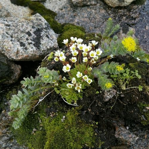 Small Flowers growing on the Stones At The Edge Of The World remind you that life can go through any Circumstances • Getting Inspired • Traveling and Enjoying Life in Russian Teriberka • EyeEm Nature Lover Flowerporn • http://mixyourworld.com/2015/05/30/teriberka-far-north-of-russia/ • http://mixyourworld.com/2015/05/30/teriberka-far-north-of-russia/
