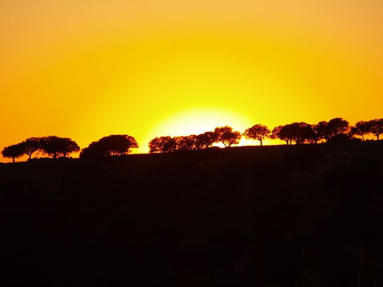 Quercus Quercus Ilex Sunset Silhouette Orange Color Nature Yellow Clear Sky Beauty In Nature Outdoors Scenics Tree Sky Landscape No People Day Dehesa Sunset_collection Sunset Silhouettes Sun Landscape_Collection Nature Tranquil Scene Tranquility Beauty In Nature