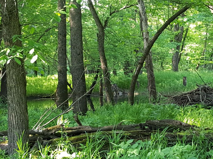 Tree Tree Trunk Nature Growth Outdoors Green Color Beauty In Nature Forest No People Day Tranquility Branch Leaf Lush - Description Grass
