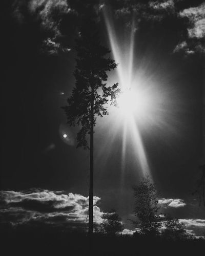 Sunbeam Tree Winter Fog Nature Outdoors Sunlight Beauty In Nature Tranquility No People Light Beam Cold Temperature Sky Black And White Tranquil Scene Tree Darkness And Light Blackandwhite Beauty In Nature Fragility Darkness And Beauty Nature