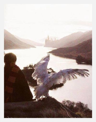 Harrypotter Hedwig Mrpotter Check This Out