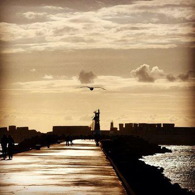 #igers #igers_porto #igersportugal #portugal_de_sonho #portugal_em_fotos #portugaloteuolhar #portugaldenorteasul #aveiro #cp #estacao #iphone5 #iphonesia #iphoneonly #iphonegraphy #iphonephotography #instagram #instalove #instagramers #instagramhub #muro Instagramers Portugal_de_sonho Instagramhub Beach Barra Sun Instalove Praiadabarra Sunset Farol Iphonegraphy Lighthouse Igersportugal Igers_porto Portugal Cp Iphoneonly Portugaldenorteasul Iphonesia Estacao Instagram Iphonephotography IPhone5 Gaivota Igers Portugaloteuolhar Aveiro Portugal_em_fotos Muro  Ig_portugal