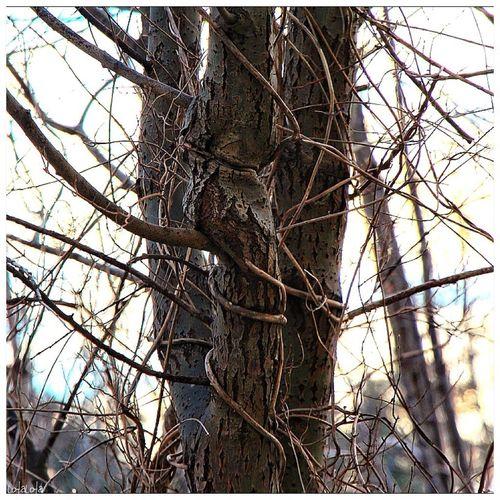 Treesqueeze