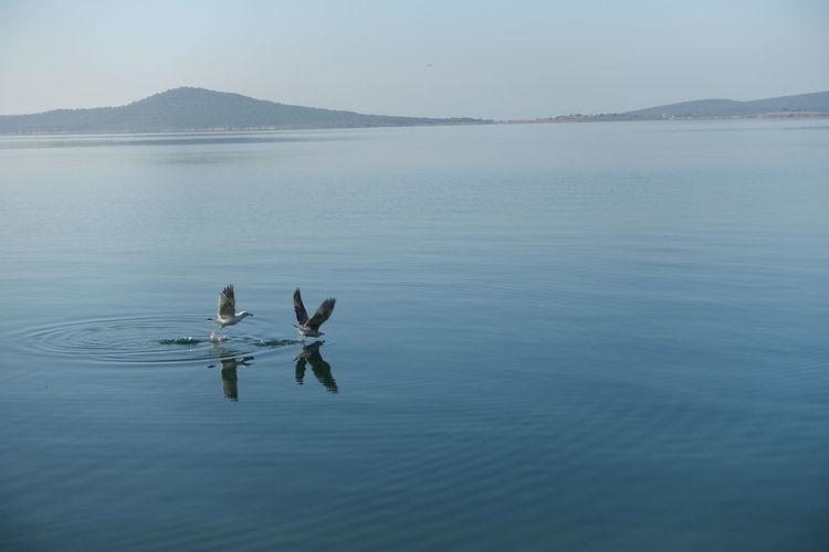 Birds landing on lake against clear sky