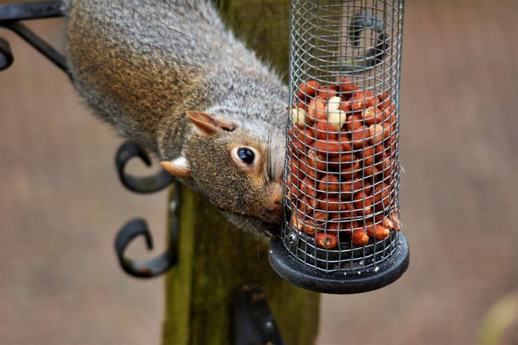 Close-up of bird feeder