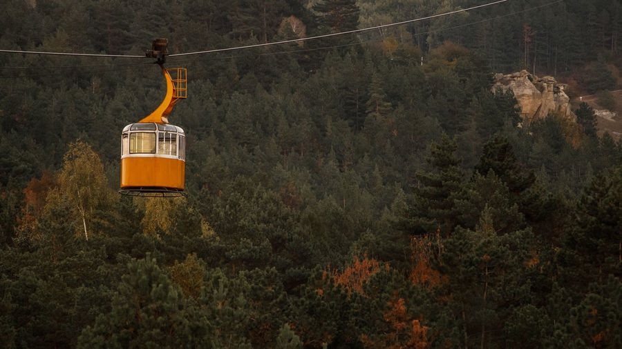 Overhead cable cars in forest