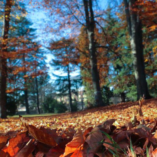EyeEm Best Shots EyeEm Gallery EyeEm Nature Lover Eye4photography  Autumn Change Leaf Nature Tree Forest Beauty In Nature