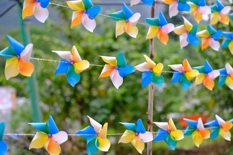 Close-up of multi colored flowers hanging on clothesline