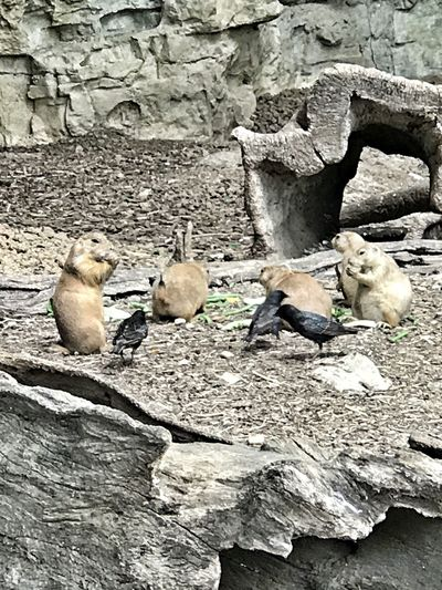 Prairie Dogs outdoors No People Animal Themes Learning From Nature EyeEm Animal Lover Arm The Animals The Human Connection Family Matters The Week On Eyem Whats For Lunch?