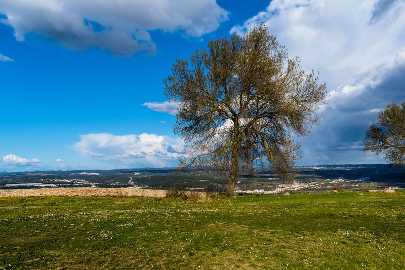 Castle of Abrantes Portugal Beauty In Nature Cloud - Sky Day Grass Landscape Nature No People Outdoors Scenics Sky Tranquil Scene Tranquility Tree Water Go Higher