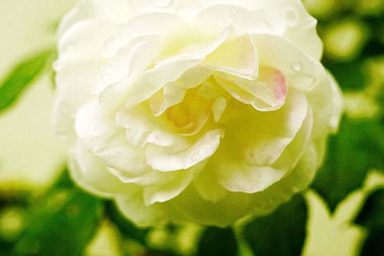 Macro shot of water drops on flower