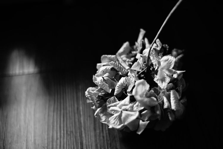 High angle view of flowering plant on table against black background