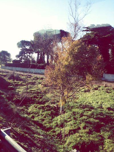 Che bella la natura Taking Photos Hello World Alberi Trees Nature Natura ♥ Viaggio Travel Enjoying Life Relaxing