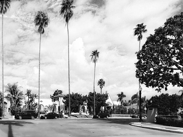 Tree Palm Tree Sky Cloud - Sky Car Road Outdoors No People Building Exterior Architecture City Day Built Structure Nature