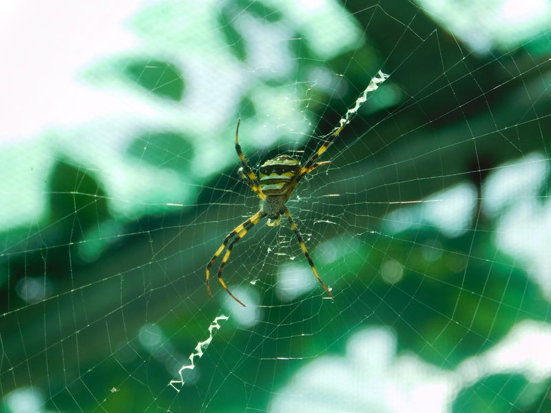 spider Green Background Background Bokeh Animal Leg Web Full Length Insect Spider Web Spider Complexity Survival Close-up Animal Themes Weaving