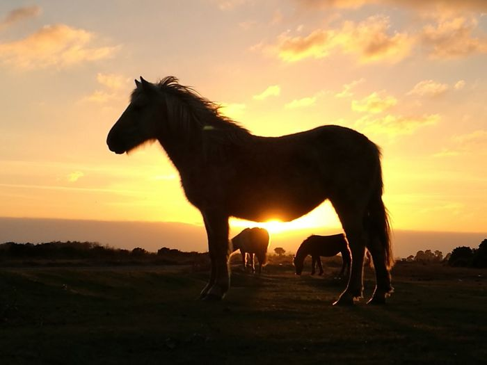 Silhouette horse on pony against sky during sunset