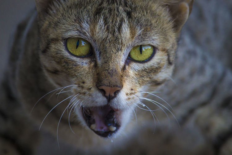 Street Cat after having meal Animal Themes Animals In The Wild Beautiful Eyes Cat Eyes Cat With Open Mouth Close-up Day Domestic Animals Domestic Cat Feline Indoors  Leopard Looking At Camera Mammal Nature No People One Animal Pets Portrait Street Cat Whisker