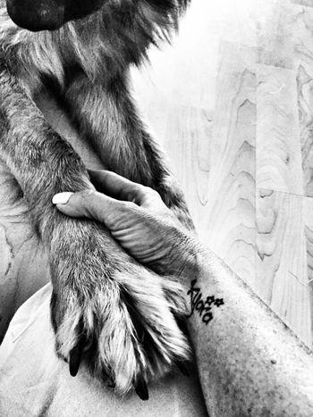 Shades Of Grey Ilovemydog Germanshepherd Dogs Tattoo ILOVEMYSON Family Wristtattoo Stars Netherlands