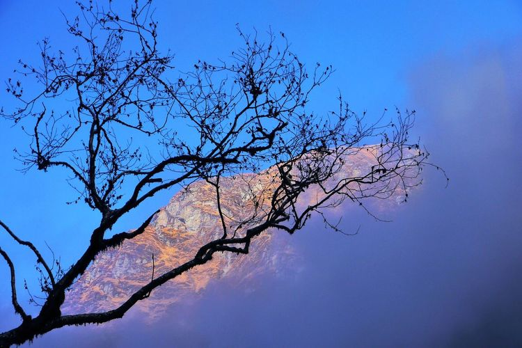Nepal Tree Shot Beauty In Nature Tree Branch Nature Low Angle View Sky No People Bare Tree Tranquility Scenics Outdoors Growth Day Contrast Perfection Perfect View Nepal Mountain Bluesky Cloud - Sky