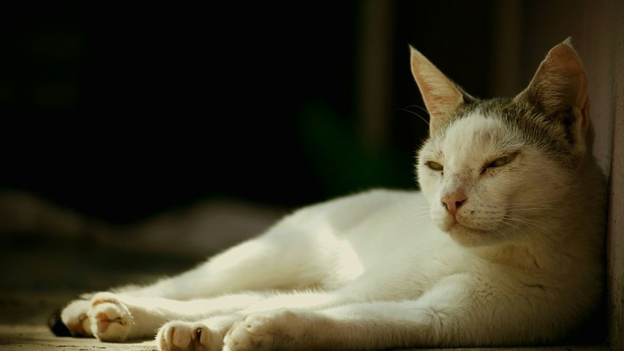 Cats Of EyeEm Staringcontest Check This Out Taking Photos Eyemphotography Eye4photography  EyeEm Best Shots Cat Lovers