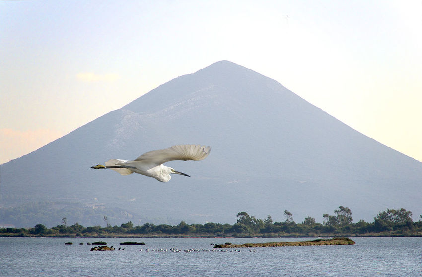 Flying heron and mountain Bird Animals In The Wild Animal Wildlife One Animal Mountain Flying Water No People Beauty In Nature Outdoors Nature Animal Themes Nature Reserve Heron Spread Wings