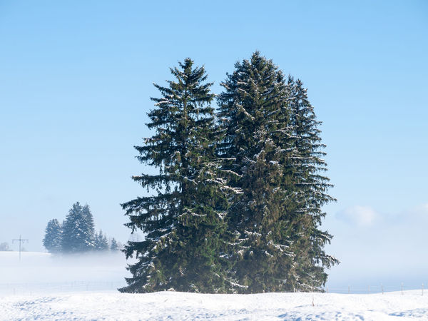 Allgäu Cold Coniferous Tree Europe First Eyeem Photo Forest Frozen Germany Landscape Nature Outdoors Pinaceae Snow Tree Water Winter