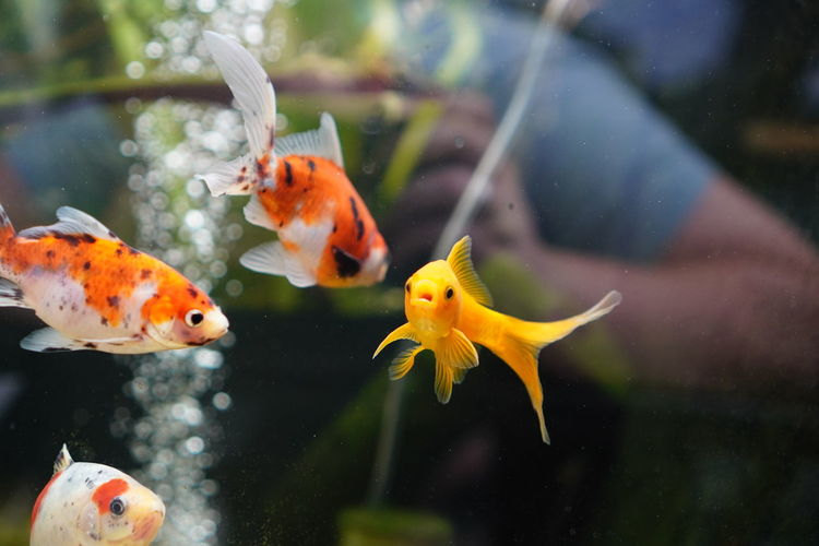 Fish swimming in pond