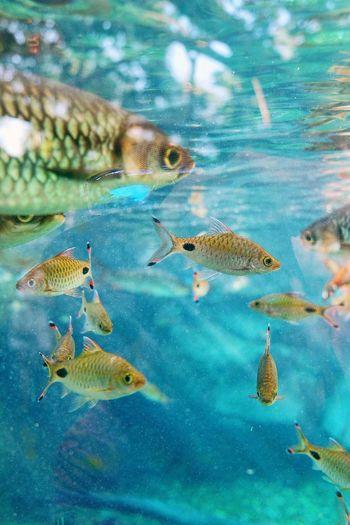 Biopark Fishtank Blue Water