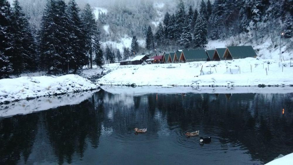 Dağ Doğa Göl Ordek Kar Bungalow Rahatlık