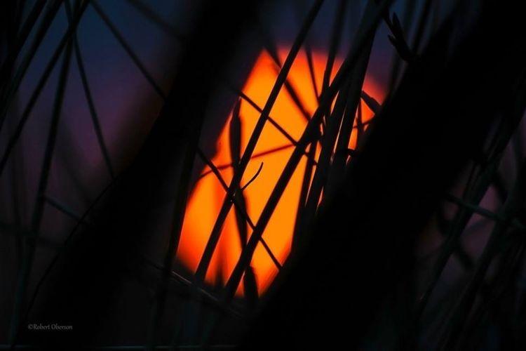 Enjoying The Sun Sunset EyeEm Nature Lover Don't Be Square
