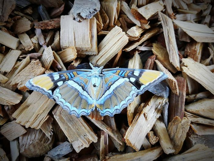 Backgrounds Full Frame Wood - Material Abundance Lumber Industry Close-up Firewood Wooden Wood Arrangement Day Outdoors Timber Heap No People Woven Butterfly