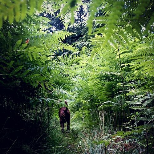 Adventure Buddies jungle bum! 🐕 Boxer Dogs In The Forest Forest Explorer FOD My Best Friend Dogslife Dog❤ Boxerlove Forest Forest Of Dean Forest Of Lost Souls
