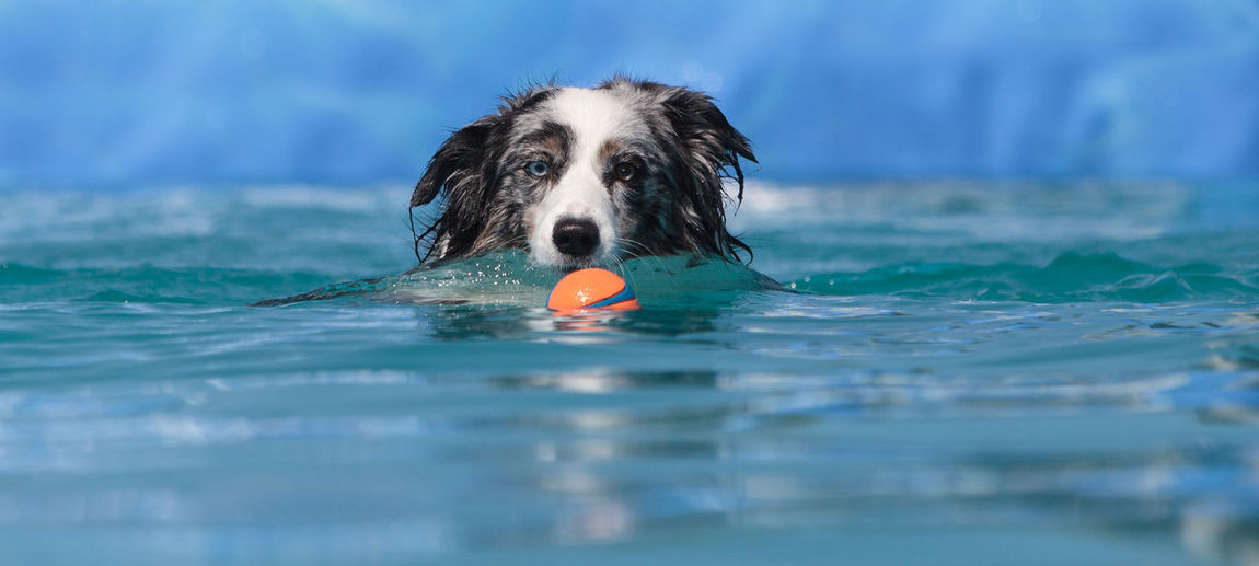 Mixed-breed dog swimming with toy pool