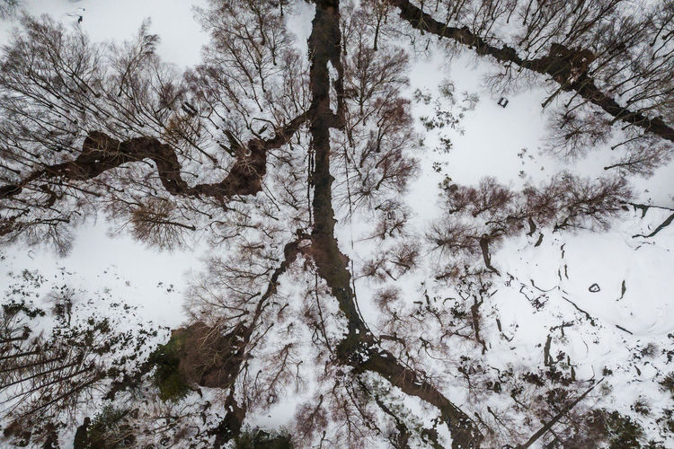Ways Of Seeing Branch Forest Landscape Nature Outdoors Snow Tree Winter Visual Creativity The Traveler - 2018 EyeEm Awards The Great Outdoors - 2018 EyeEm Awards