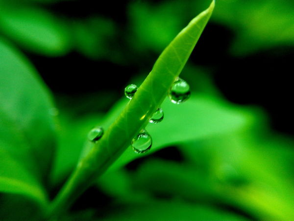 Raindrops Rain Drops Green Color Nature Close-up No People Drop Water Freshness Nature Green Color Leaf Rain Drops On Leaves One Animal Day Likeforlikers EyeEm Team Likes4likes Perspectives On Nature