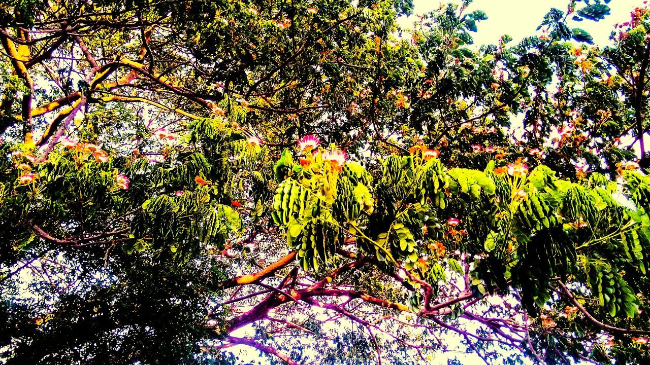growth, flower, nature, beauty in nature, tree, outdoors, day, plant, no people, freshness