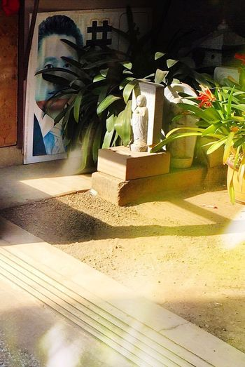 Built Structure Architecture Palm Tree Sunlight Plant Building Exterior Tropical Climate Outdoors Tree Window Potted Plant Art And Craft Creativity Nature Building Shadow No People Sand Representation Day
