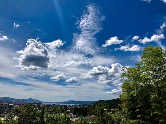 A Beautiful Cloudscape. (180911-181013) Cloud - Sky Sky Plant Beauty In Nature Tree Nature Day Scenics - Nature Environment Land Sunlight Blue Idyllic Growth Tranquil Scene Tranquility Outdoors No People Low Angle View