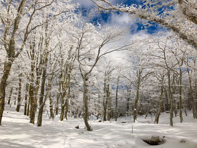 Beauty 明神平 Japan 自然 木々 冬 雪景色 森 樹氷 Trees Scenery Ice Frost Frosted Nature Winter Snow Cold Temperature Beauty In Nature Nature Tree Tranquil Scene Forest Landscape Frozen Beauty No People Sunlight Outdoors Scenics Tranquility Sky