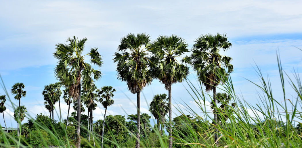 Low angle view of palm trees on field against sky