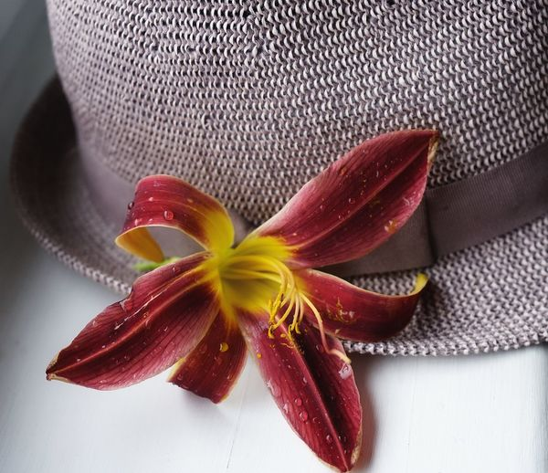 Indoors  Flower Close-up No People Day Hat EyeEmNewHere EyeEm New Selects SONY A7ii Still Life Window Red Lily Red